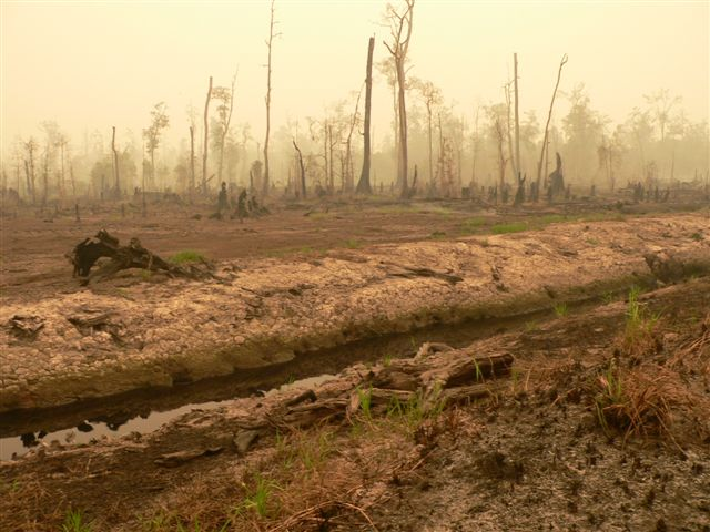 Borneo's Rainforests Make Way for Palm Oil Plantations